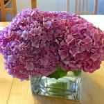 Random: My Hydrangea Plant