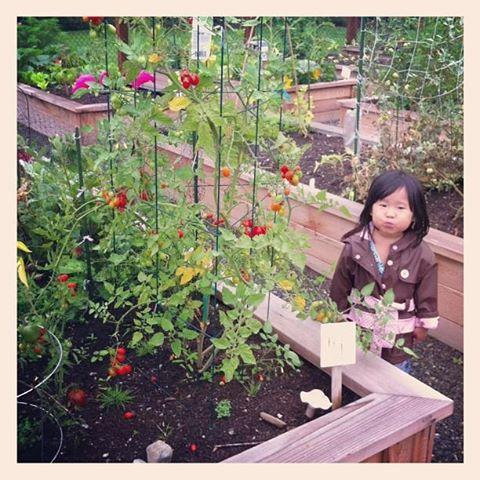 cherry_tomatoes | HipFoodieMom.com