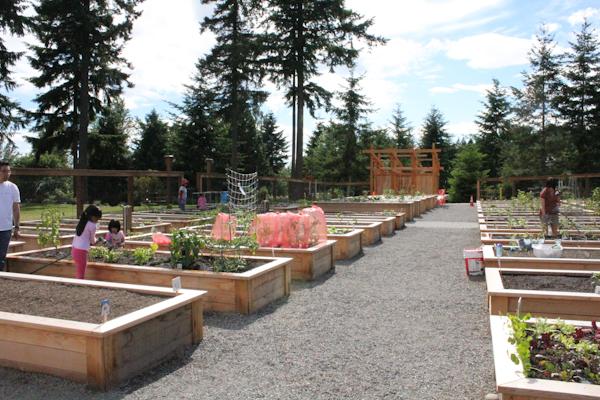 our community garden_big