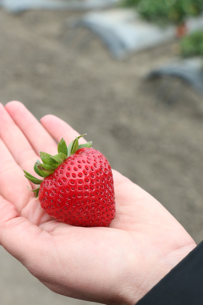 A hand holding a strawberry.